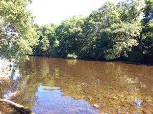 River Tarr