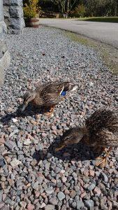 Summer holidays in Loch Ness